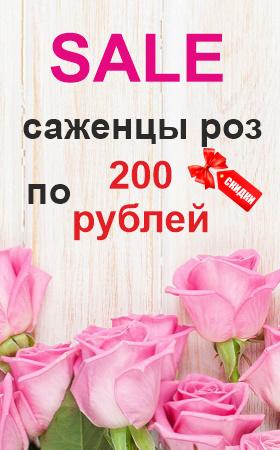 Акция саженцы роз по 200 рублей